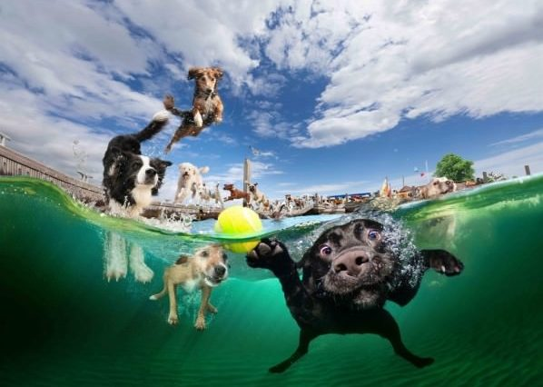 Dogs Who Love to Swim