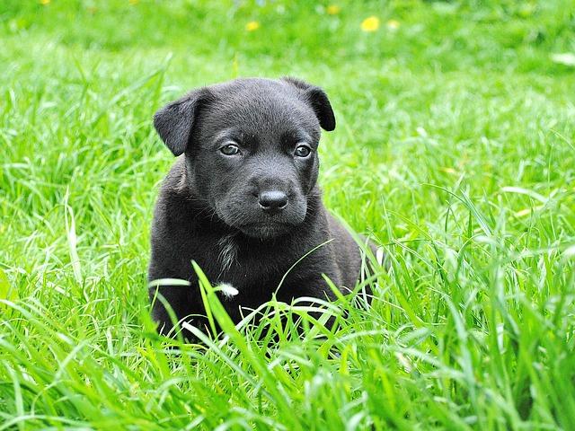 Puppy cute picture