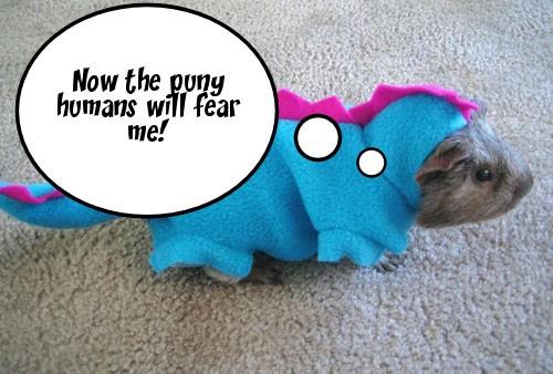 Cute Guiena Pig